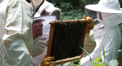 APICULTURE : Stage d'Initiation à l'apiculture bio par la pratique